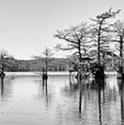 Duck Blind On Caddo Lake Poster