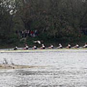 Duck Chasing The Boat Race Poster