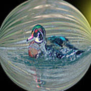 Duck In A Bubble  Poster