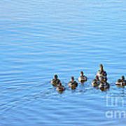 Ducklings Day Out Poster by Kaye Menner