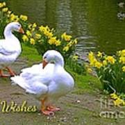 Ducks And Daffodils Greeting Poster