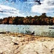Ducks At The Beach Again Poster