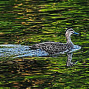Ducks On Green Reflections - Panorama Poster