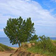 Dune - Indiana Lakeshore Poster