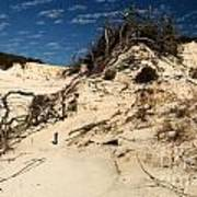 Dune Glue Poster by Adam Jewell
