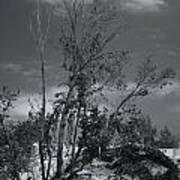 Dunes Tree Bw Poster
