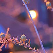Dusk Flowers Poster