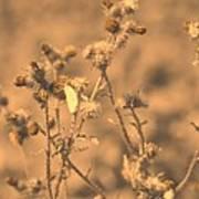 Dusty Desert  Poster