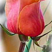 Dusty Rose Impasto Poster by Steve Harrington