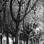 Dutch City Trees - Black And White Poster