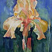 Dutch Iris Poster