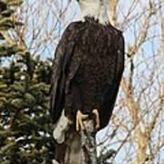 Eagle 1991a Poster