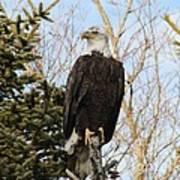 Eagle 6 Poster