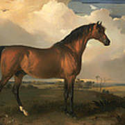 Eagle - A Celebrated Stallion Poster