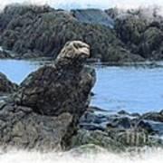 Eagle At Rest Poster