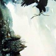 Eagle building Nest. Poster