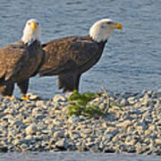 Eagle Couple Poster