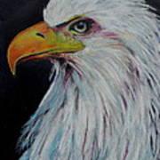 Eagle Eye Poster by Jeanne Fischer