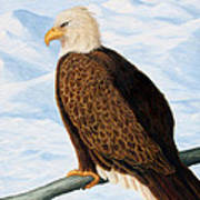 Eagle In Alaska Poster by Lorraine Foster