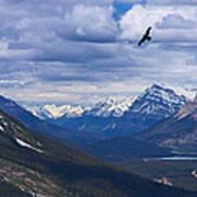 Eagle Over Peyto Lake Poster