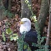 Eagle Pose Poster