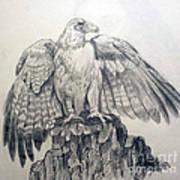 Eagle Sketch Poster