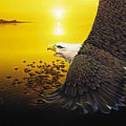 Eagle Sunset Poster