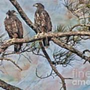 Eaglets In Oil Poster