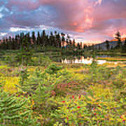 Early Autumn Meadow Sunset At Mt Baker Poster