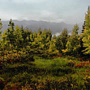 Early Fall On Kebler Pass Poster