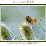Early Morning Butterfly Poster