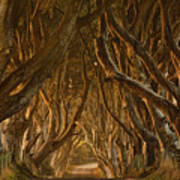 Early Morning Dark Hedges Poster