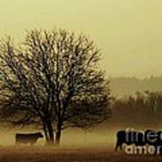 Early Morning Fog 008 Poster