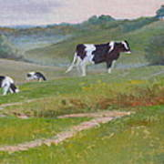 Early Morning Holsteins Poster