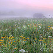 Early Morning Meadow Poster