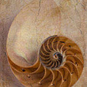 Earthy Nautilus Shell  Poster