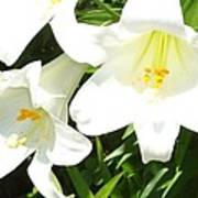 Easter Lilies At Longue Vue Poster by Katie Spicuzza