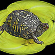 Eastern Box Turtle On Yellow Lily Poster