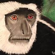 Eastern Colobus Monkey Poster