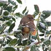 Eastern Rufous-sided Towhee Poster