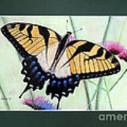 Eastern Tiger Swallowtail Butterfly By George Wood Poster