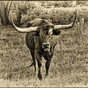 Eat Leaf Not Beef Sepia Poster