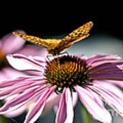 Echinacea And Friend Poster