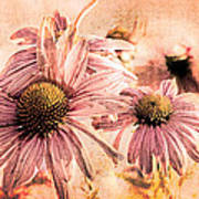 Echinacea Impressions  Poster
