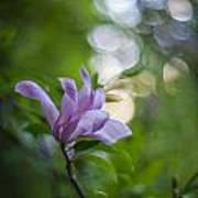 Effervescent Magnolia Poster