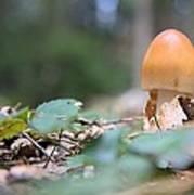 Egg Poppin Fungus Poster