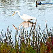 Egret And Coot In Autumn Poster