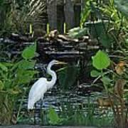 Egret At A Pond Poster