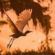 Egret Flying Poster