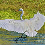 Egret Full Wing Span Poster